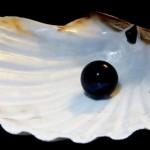 black_pearl_in_shell